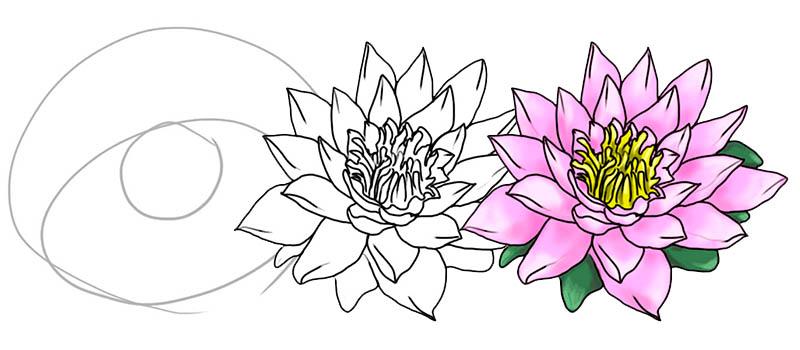 То означает цветок лотоса