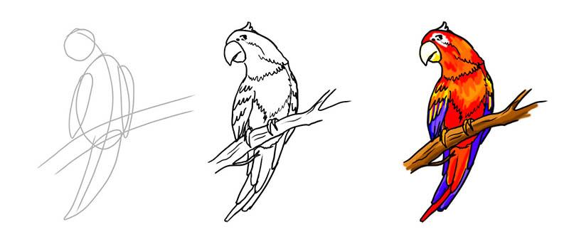Как нарисовать попугая поэтапно ару