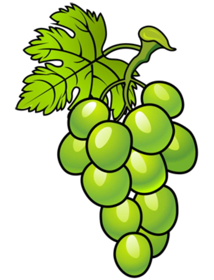 Раскрашиваем виноградную гроздь