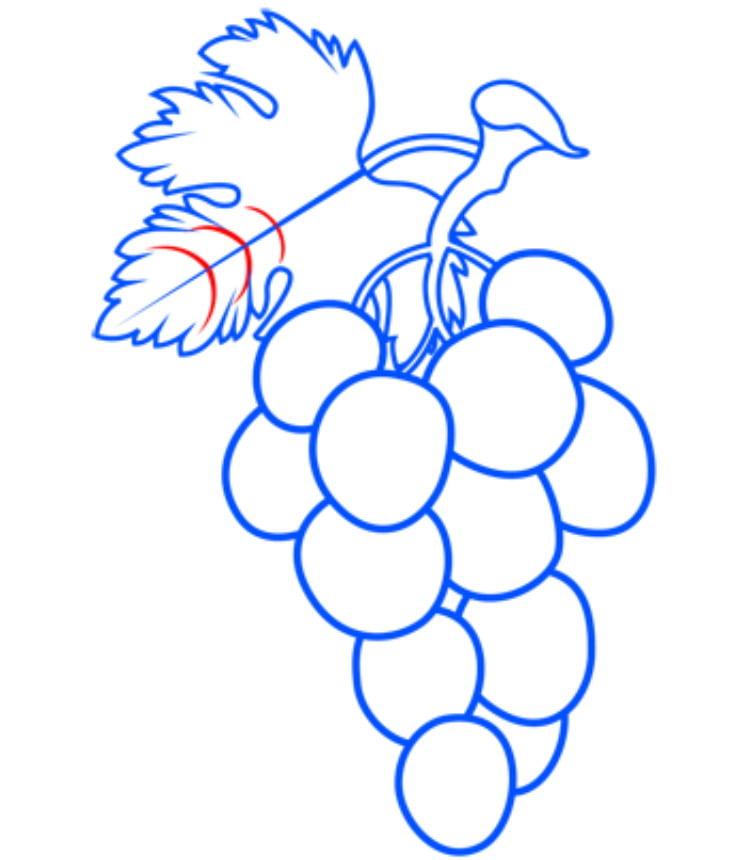 grapes11