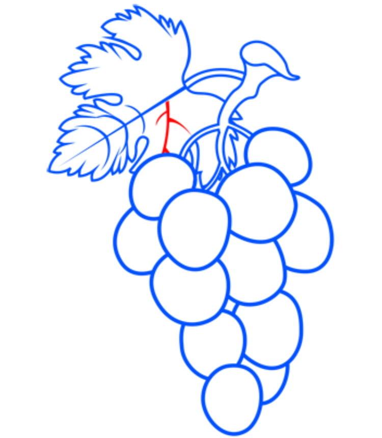 grapes12