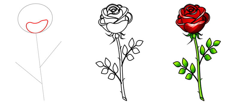 Рисуем поэтапно карандашом розу