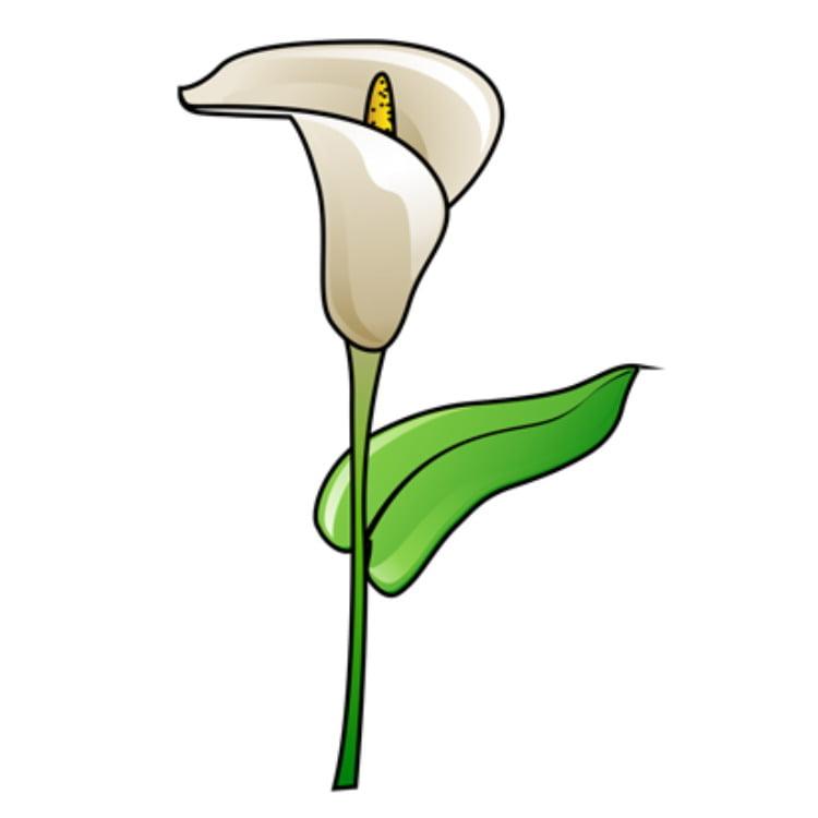 Свежие цветы с доставкой по России и миру